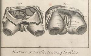 Encyclopedie planche 3 detail