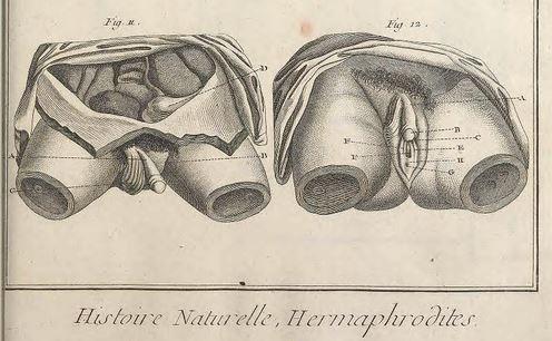 Anatomie – Seite 2 – Männlich-weiblich-zwischen