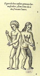 Pare 1585 herm heidelberg
